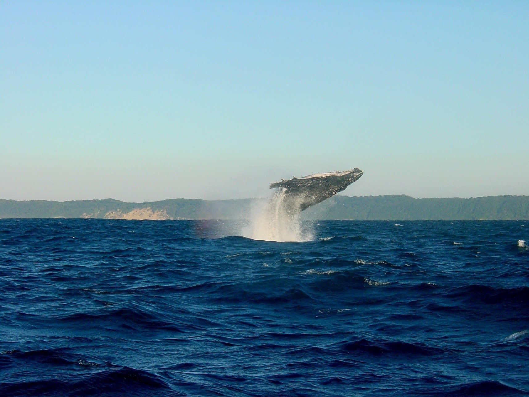 Whale_1715x1290_Web