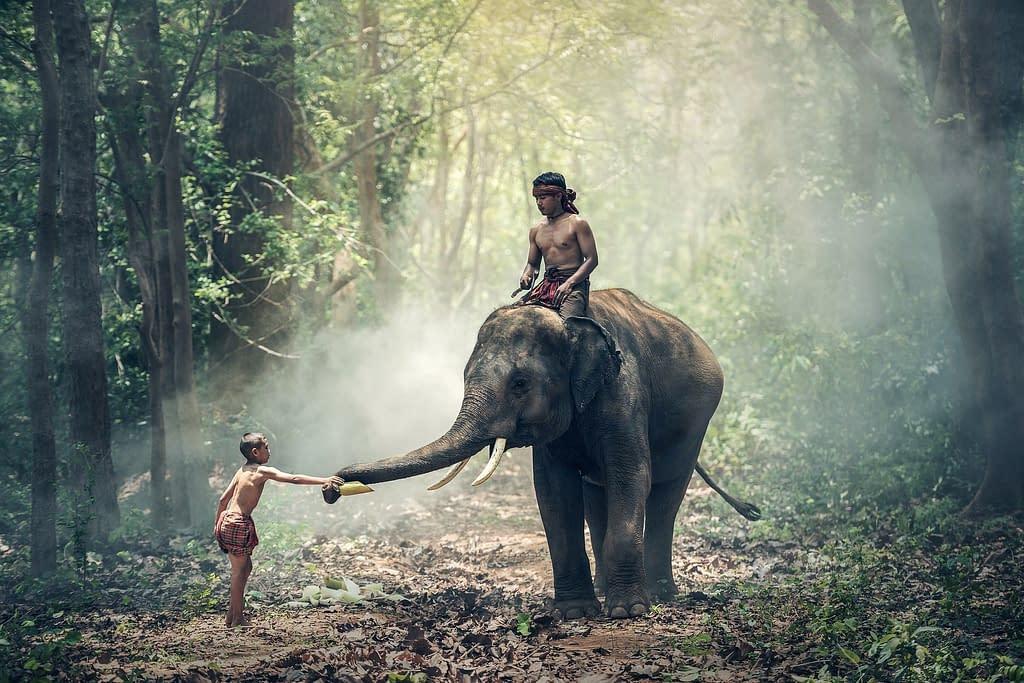 Cambogia elefanti